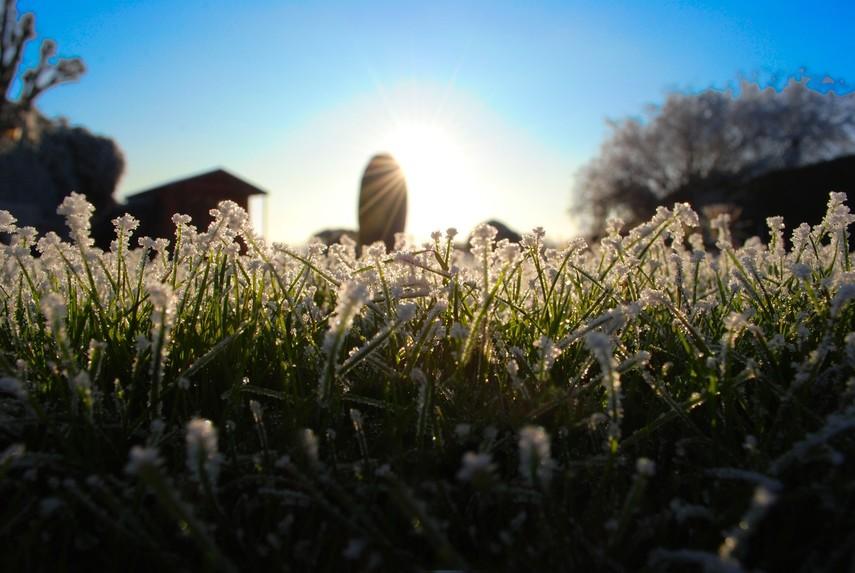 Синоптики предупреждают о заморозках с 18 апреля
