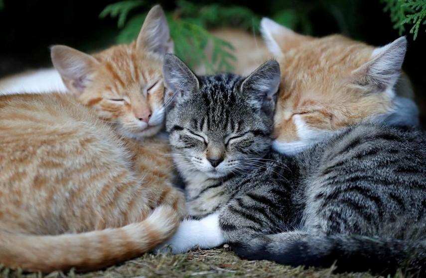 Более 300 кошек нашли в канадской квартире
