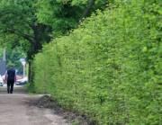 Вокруг парка в Соломенском районе появилась зеленая изгородь
