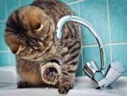 В столице 7 районов остались без горячей воды